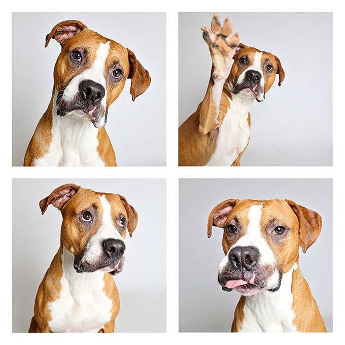 blog_yummypets-chiens-photomaton_06_2015_14