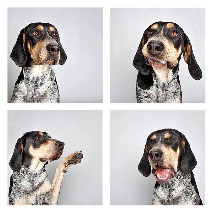 blog_yummypets-chiens-photomaton_06_2015_18