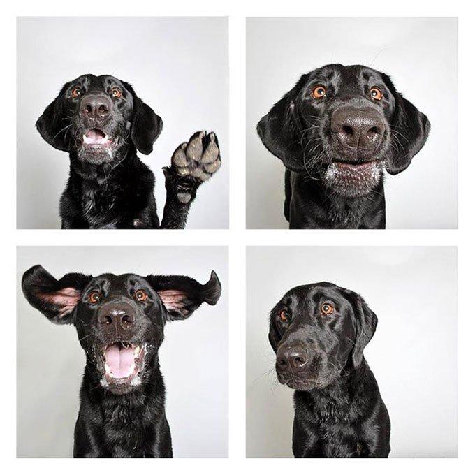 blog_yummypets-chiens-photomaton_06_2015_20