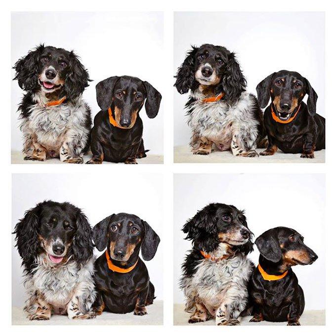 blog_yummypets-chiens-photomaton_06_2015_21