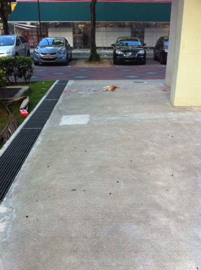 blog_yummypets_chat_parking_06_2015_1