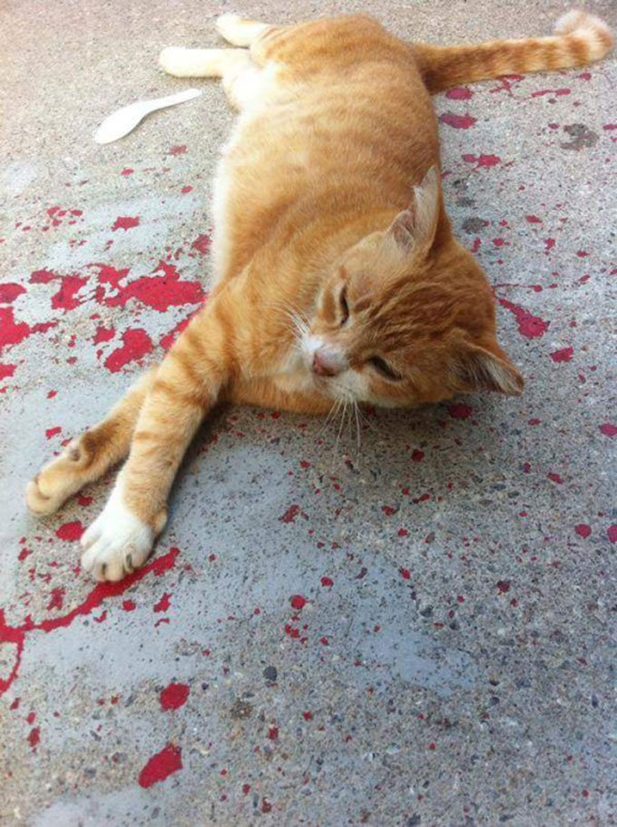 blog_yummypets_chat_parking_06_2015_3