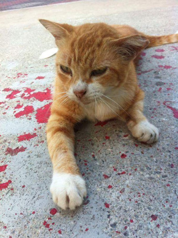 blog_yummypets_chat_parking_06_2015_4