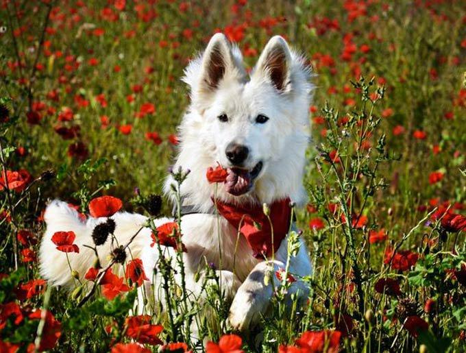 blog_yummypets_chiens_fleurs_photo-10_06_2015