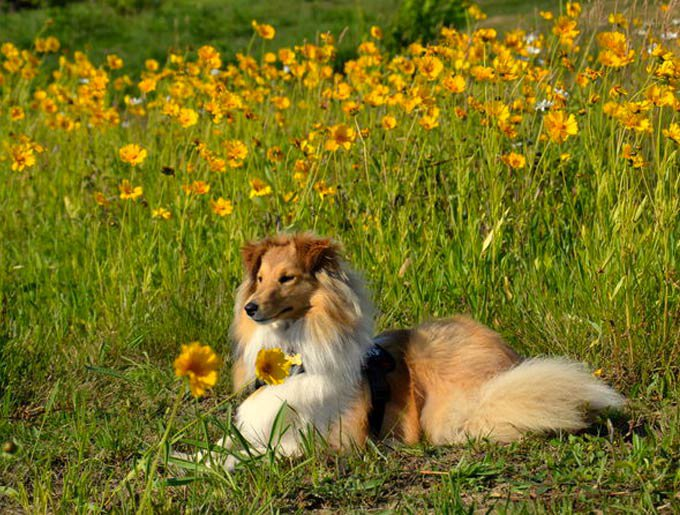 blog_yummypets_chiens_fleurs_photo-6_06_2015