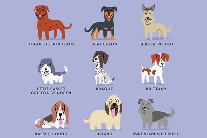 blog_yummypets_French_Dogs_08_2015