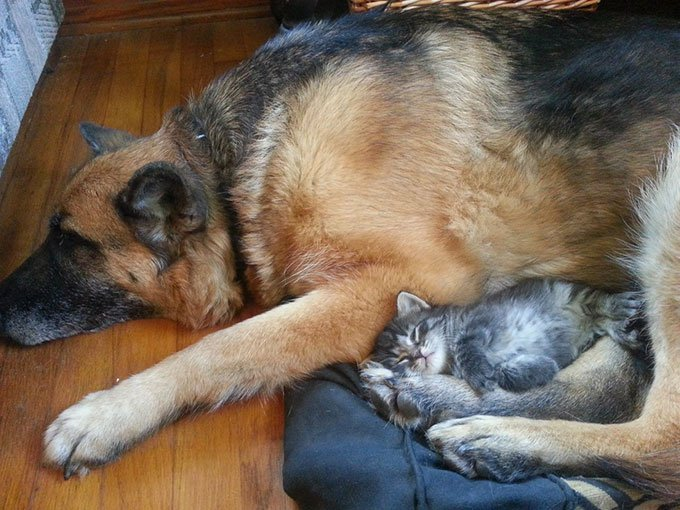 blog_yummypets_chien_chaton_07_2015_10