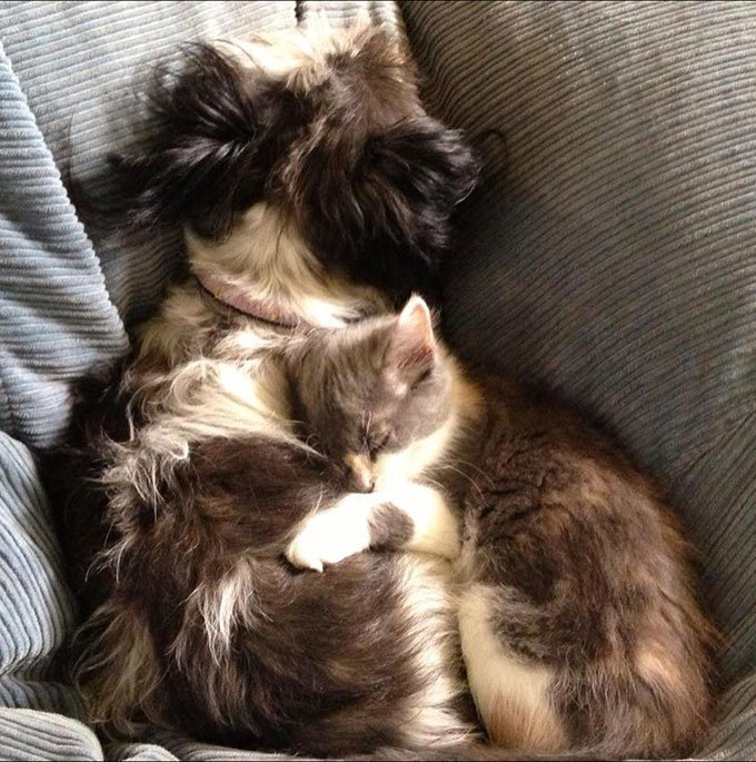 blog_yummypets_chien_chaton_07_2015_11