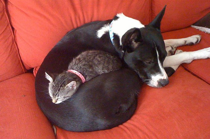 blog_yummypets_chien_chaton_07_2015_3