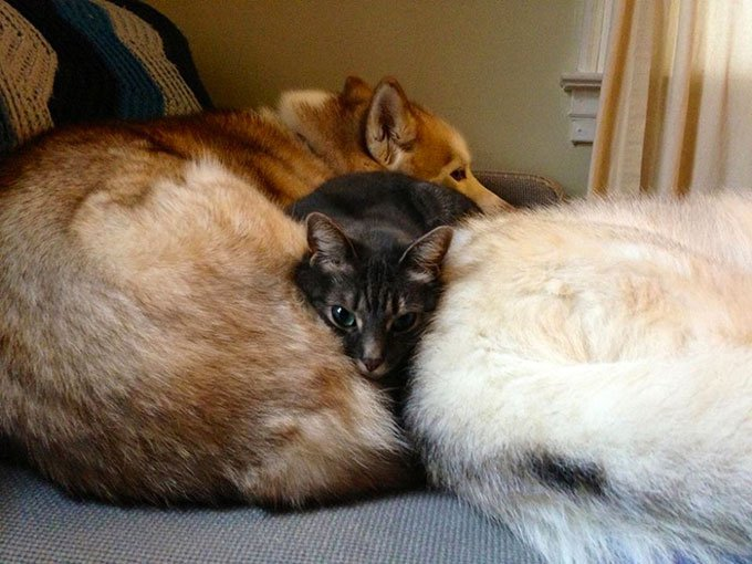 blog_yummypets_chien_chaton_07_2015_4