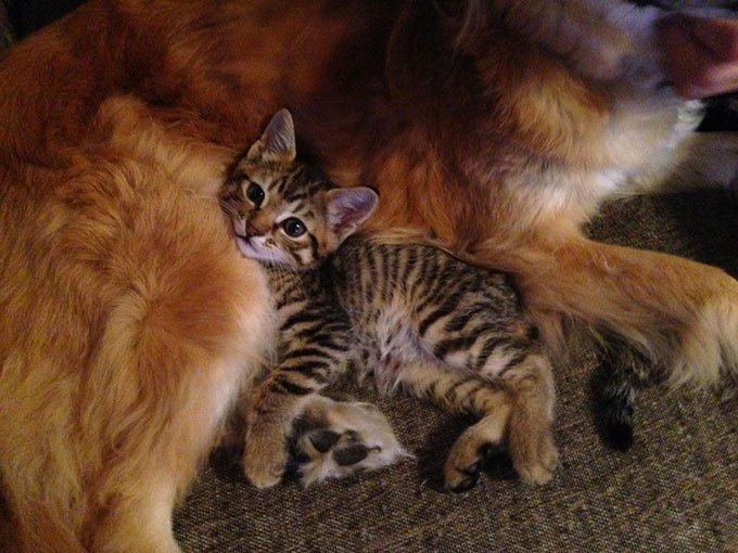 blog_yummypets_chien_chaton_07_2015_9