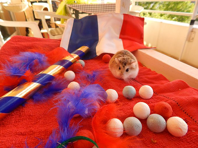 blog_yummypets_concours_14_juillet_07_2015_5