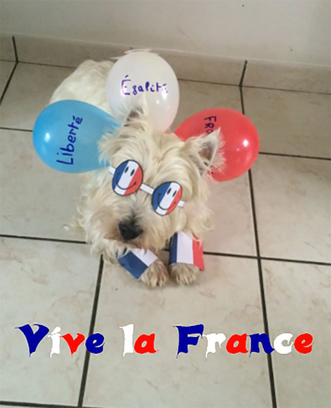 blog_yummypets_concours_14_juillet_07_2015_9