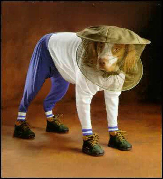 blog_yummypets_dog_hacks_07_2015_9