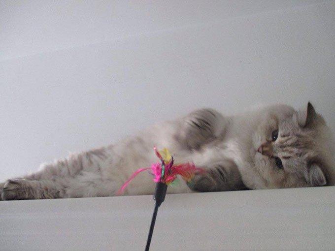 jeux plumeau pour chats