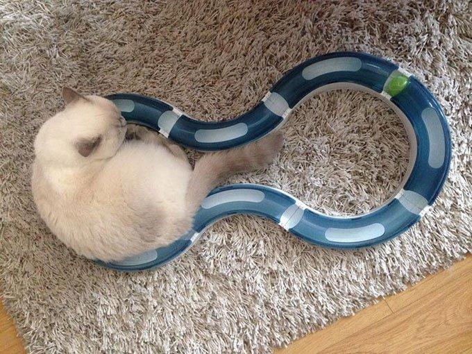 jeux circuit pour chats