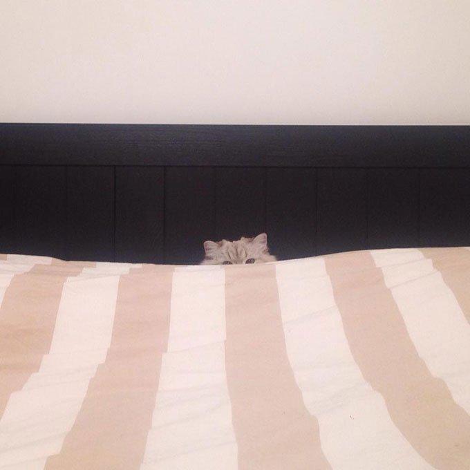 jeux cache-cache pour chats