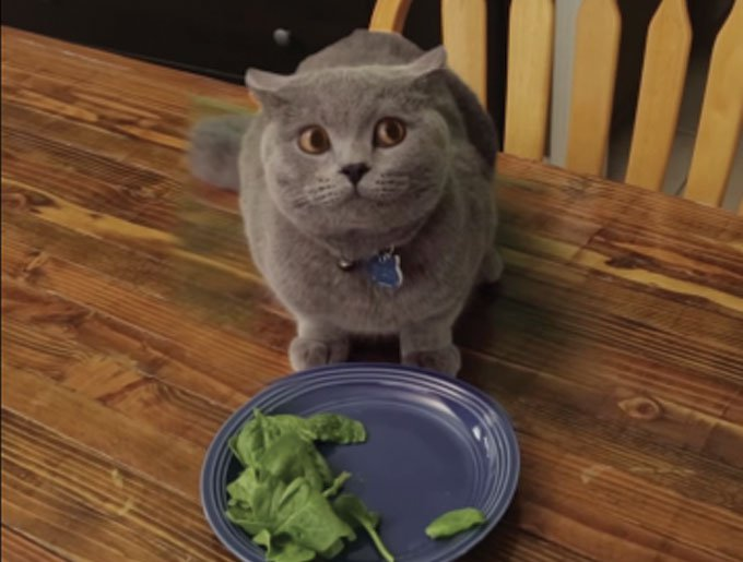 blog_yummypets_video_chat_assiette_07_2015