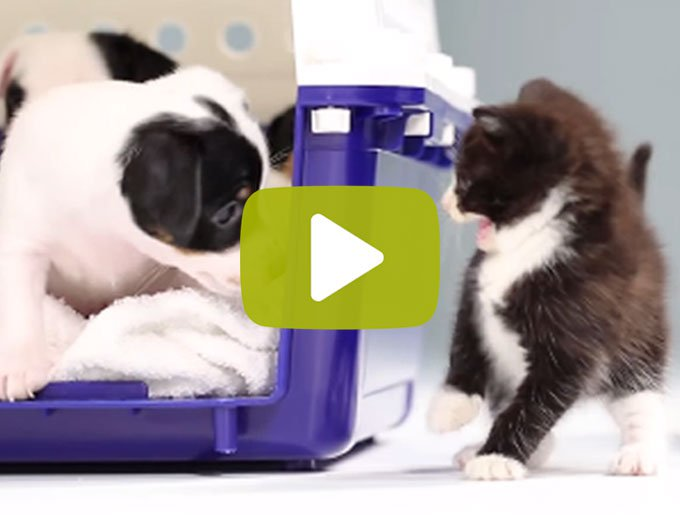 blog_yummypets_video_rencontre_chatons_chiots_07_2015