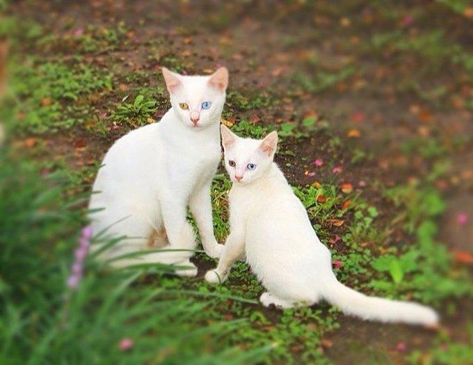 blog_yummypets_chat_minimoi_08_2015_10