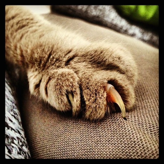 blog_yummypets_chat_pattes_5_08_2015