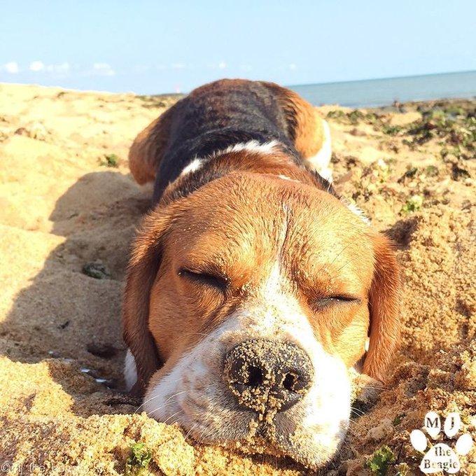 blog_yummypets_photos_chien_été_10_08_2015