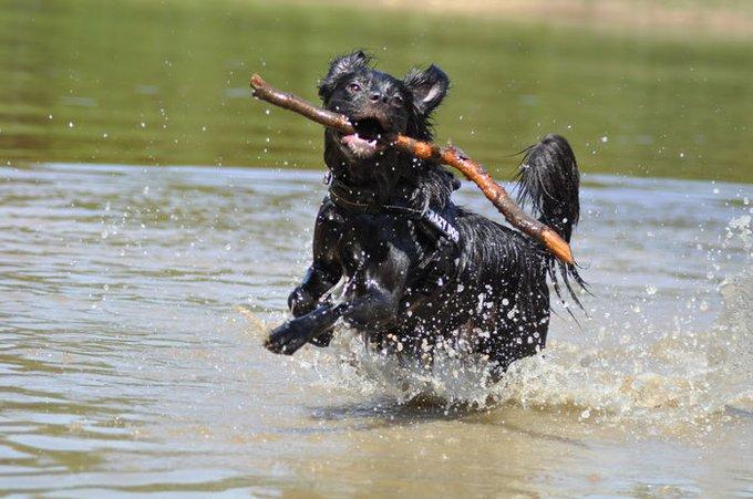 blog_yummypets_photos_chien_été_1_08_2015