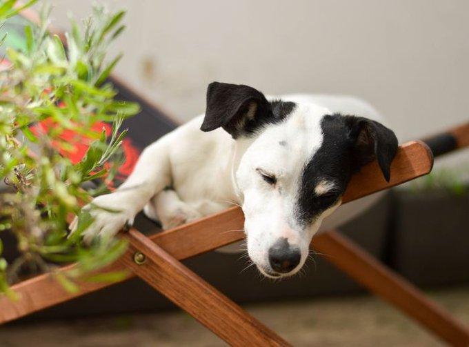 blog_yummypets_photos_chien_été_4_08_2015