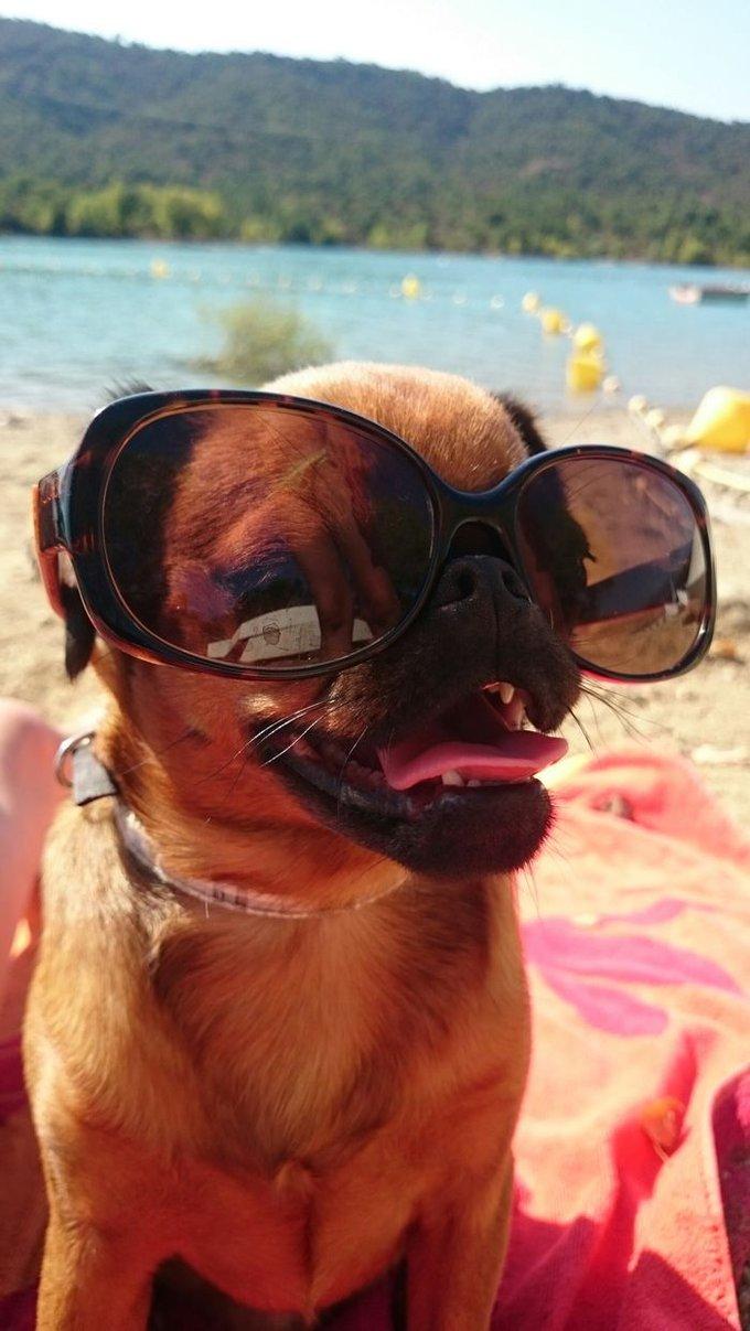 blog_yummypets_photos_chien_été_7_08_2015