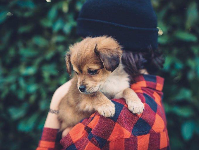 blog_yummypets_presentation_doggyguard_08_2015