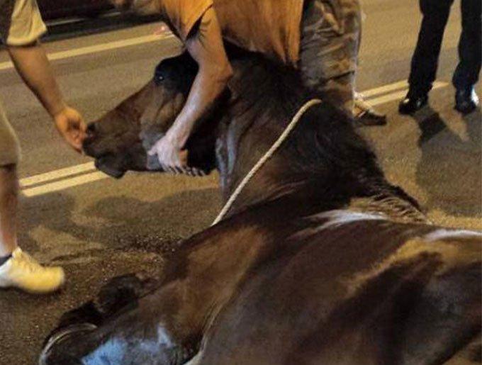 bog_yummypets_cheval_mort_barcelone_4_08_2015