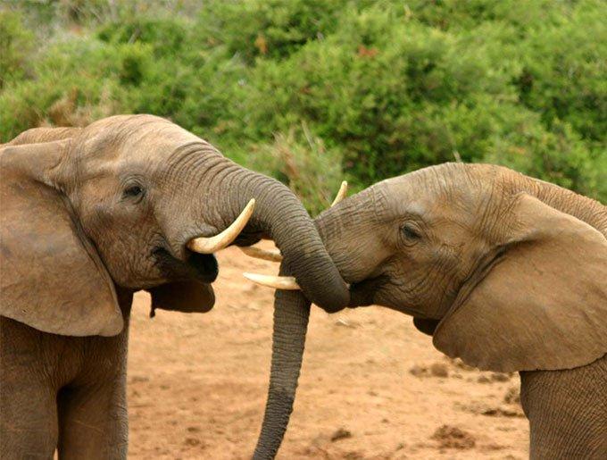 bog_yummypets_journee_mondiale_elephant_08_2015