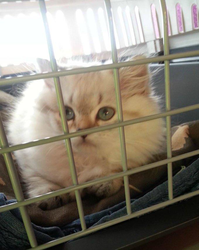 chat dans sa cage