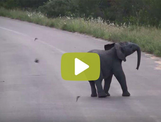 video_pla)çàguyy-Récupéré