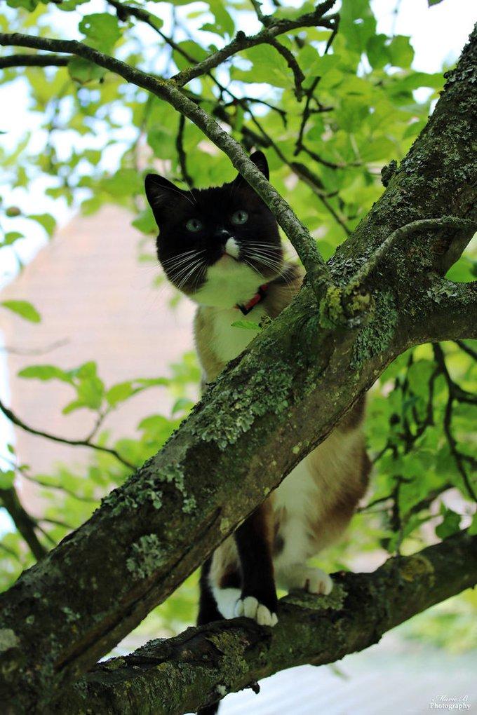 blog_yummypets_chats_arbres_7_09_2015