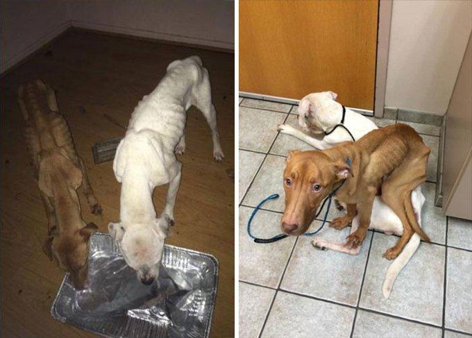 blog_yummypets_chiens_transformation_2_09_2015