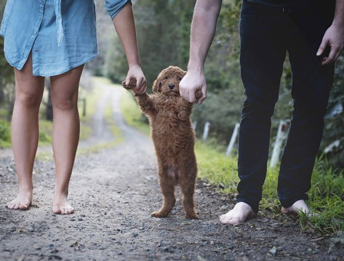 blog_yummypets_couple_shooting_chiot_2_09_2015