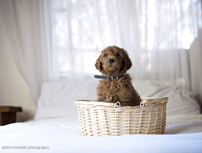 blog_yummypets_couple_shooting_chiot_5_09_2015