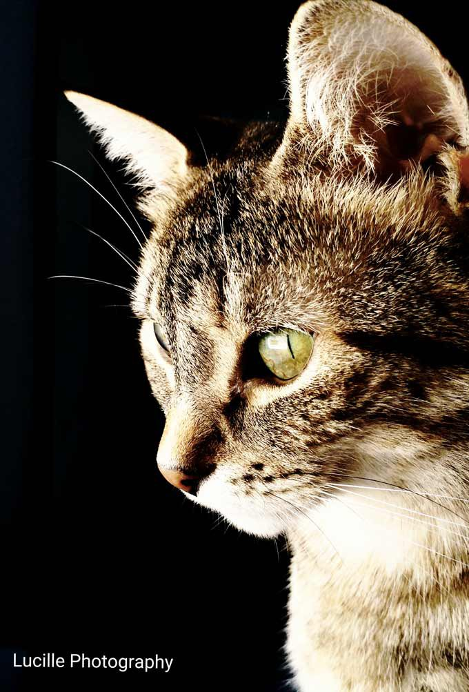 blog_yummypets_interview_lucille_filoute_1_09_2015
