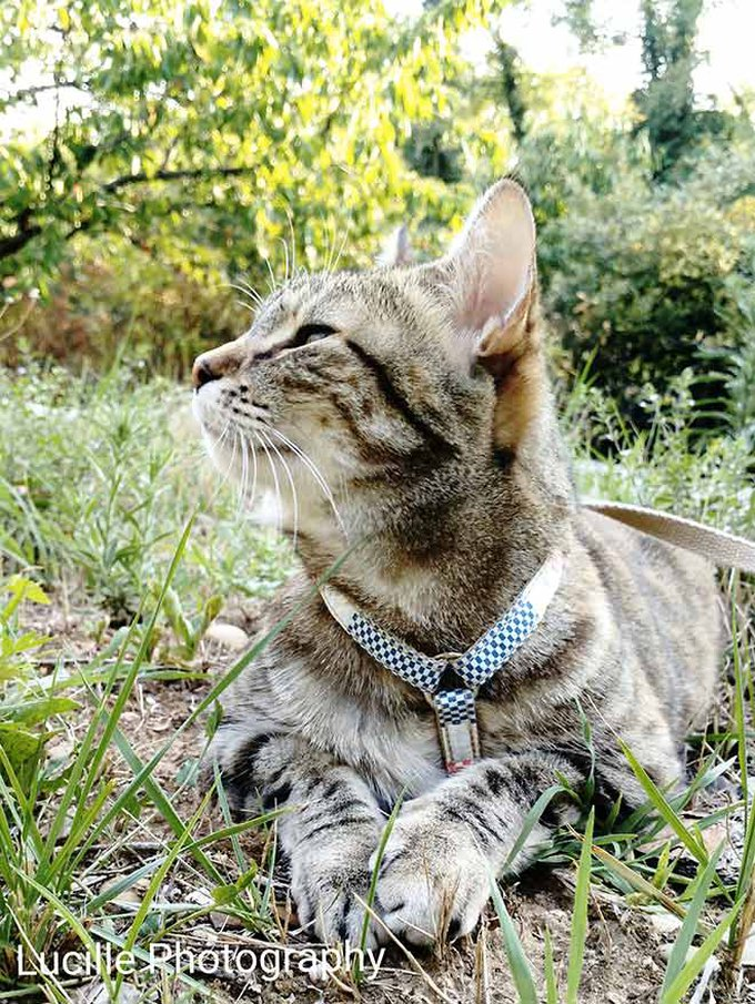 blog_yummypets_interview_lucille_filoute_3_09_2015