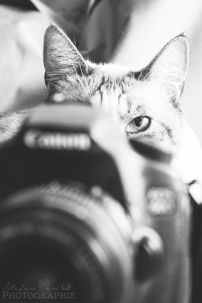 blog_yummypets_photos_semaine_14_4_09_2015