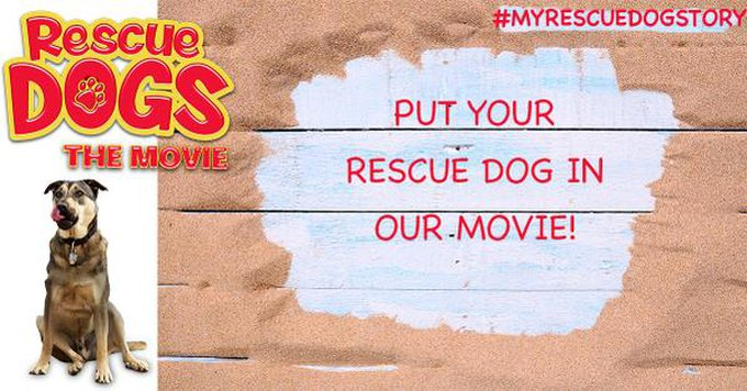 blog_yummypets_rescue_dogs_film_2_09_2015