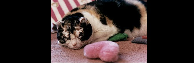 blog_yummypets_saviours_in_all_shapes_and_size_4_9_2015