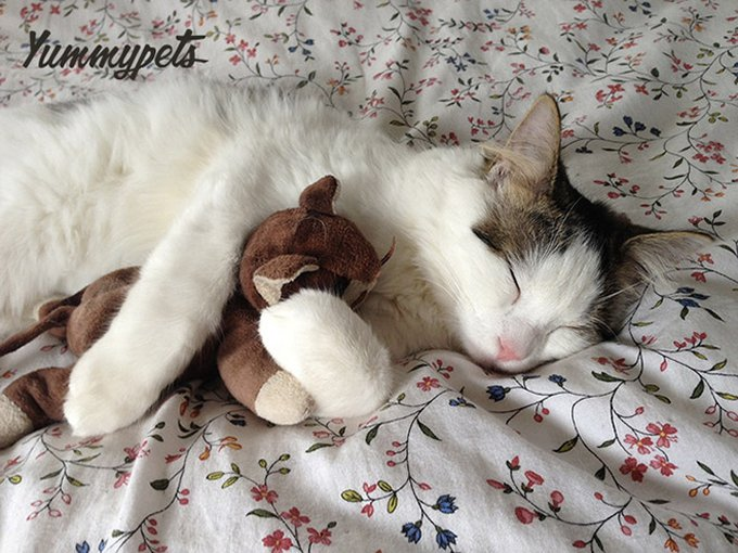 blog_yummypets_toys_for_your_pet_cat_01_09_2015