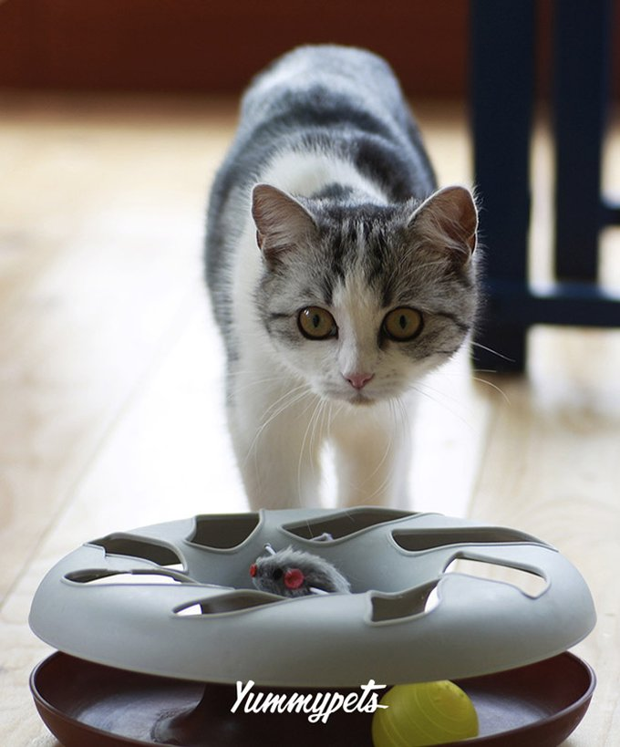 blog_yummypets_toys_for_your_pet_cat_02_09_2015