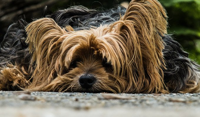 blog_yummypets_tricks_and_commands_to_teach_your_dog_01_09_2015