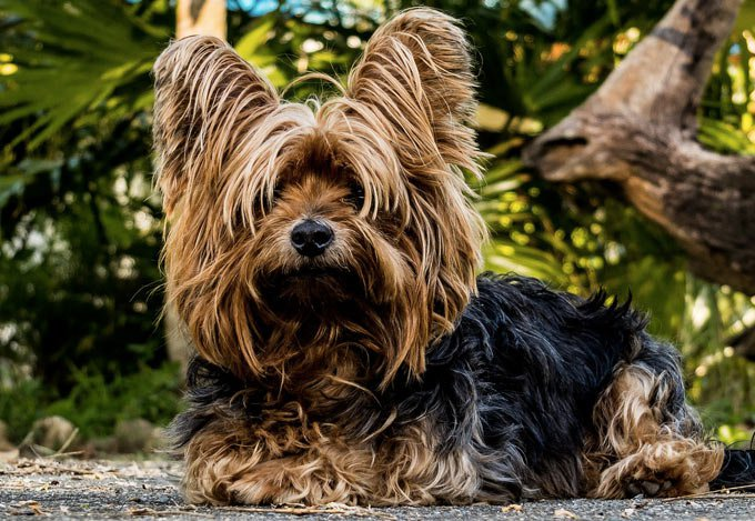 blog_yummypets_tricks_and_commands_to_teach_your_dog_03_09_2015