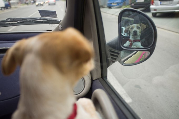 blog_yummypets_vackor_chien_rue_9_09_2015