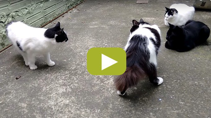 blog_yummypets_video_bagarre_chat_02_09_2015