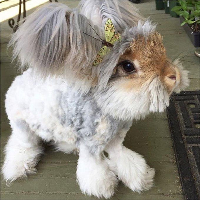 blog_yummypets_wally_bunny_5_09_2015